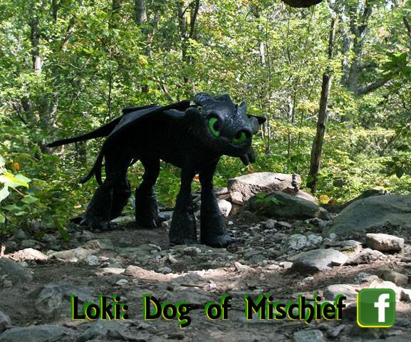 Toothless Costume For Dogs Toothless Costume Diy Dog
