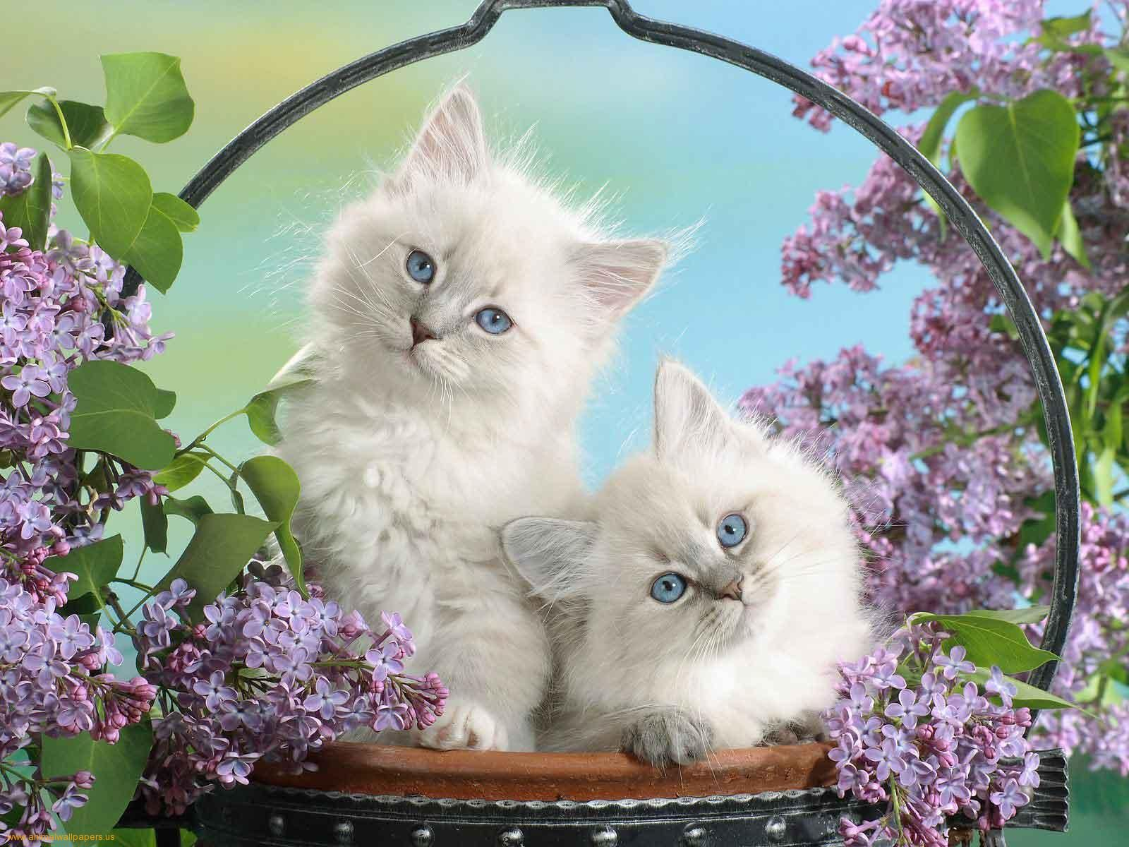 Puppies Kittens Two In A Basket Of Flowers Wallpaper With