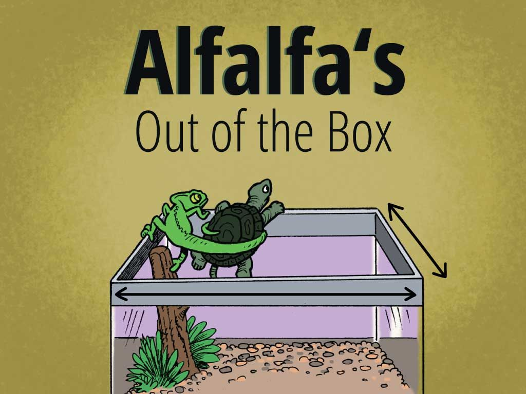 Alfalfa The Turtle Is Always Up For An Adventure Especially When It Involves Math In This Sweet Story 1st Grade Math Games 5th Grade Math Games Coding Games [ 768 x 1024 Pixel ]