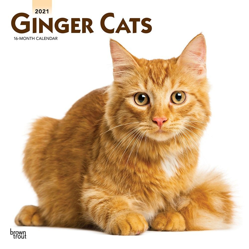 Ginger Cats Wall Calendar In 2020 Ginger Cats Cats Cat Fur