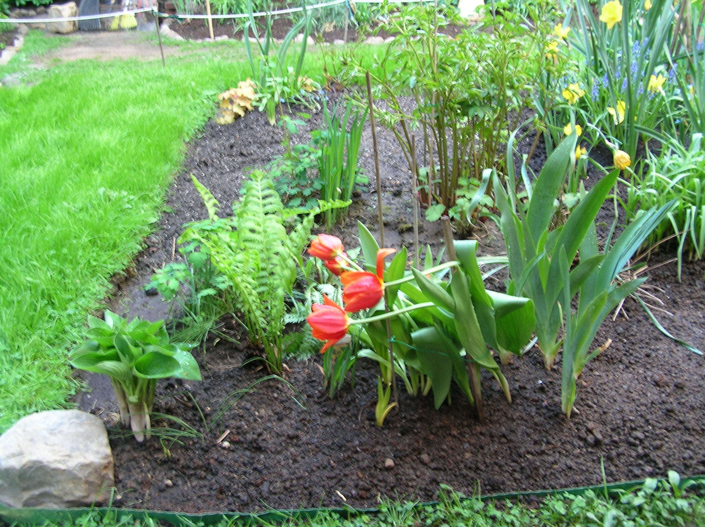 Hosta, ferns, tulips, 1/6th of the reclaimed German iris (today from a construction site that was about to weed-whack them!) - based upon what I salvaged I am pretty sure about a $200 savings was realised!