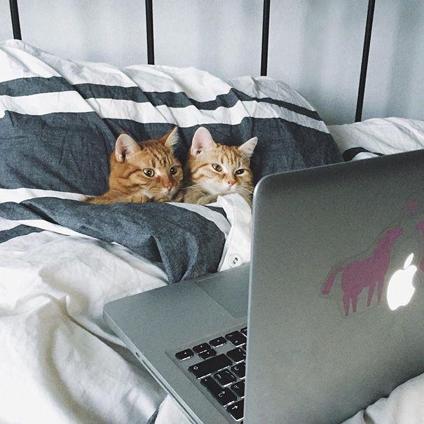 dating cât de des)