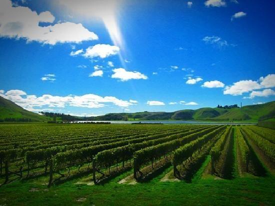 Moana Park Winery - Napier, New Zealand | Dream vacations, Australia  travel, Travel photos