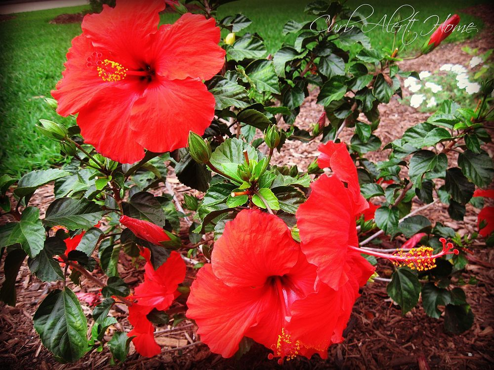Drought tolerant plants part ii drought tolerant plants