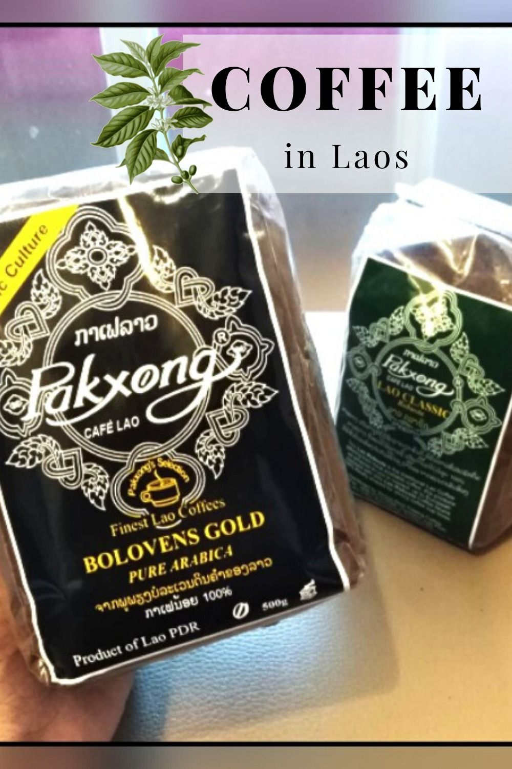 Try Lao Coffee! in 2020 Coffee type, Coffee, Growing coffee