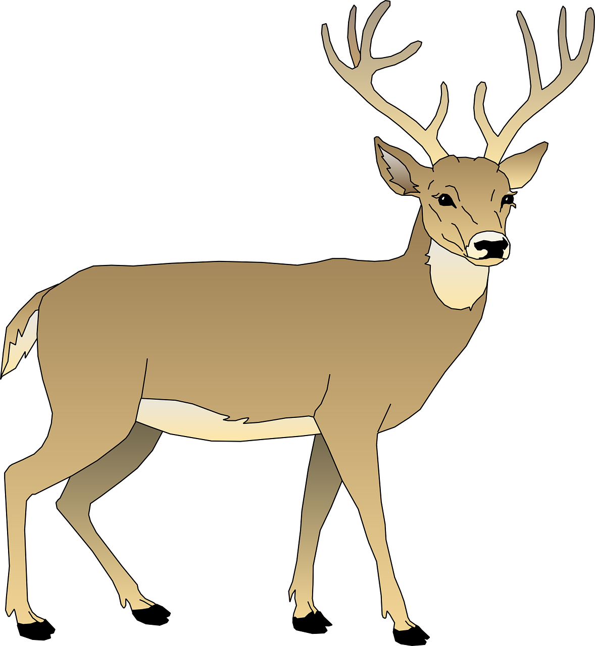 Spring Wildlife Movement And Activity On Lawns And Gardens Animals Whitetail Deer Mammals