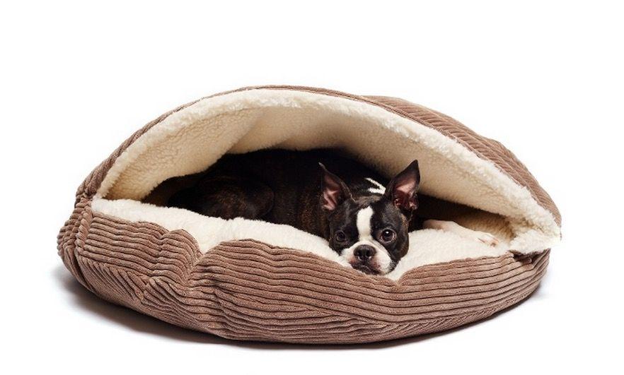 Pet Beds & Leashes Amazing Deals for Nashville Pet Owners