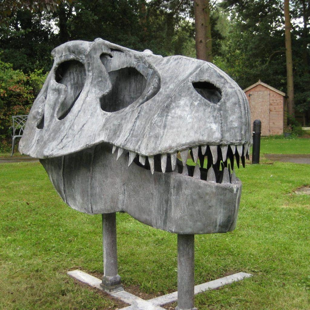 T rex skull coffee table httptherapybychance pinterest t rex skull coffee table geotapseo Gallery