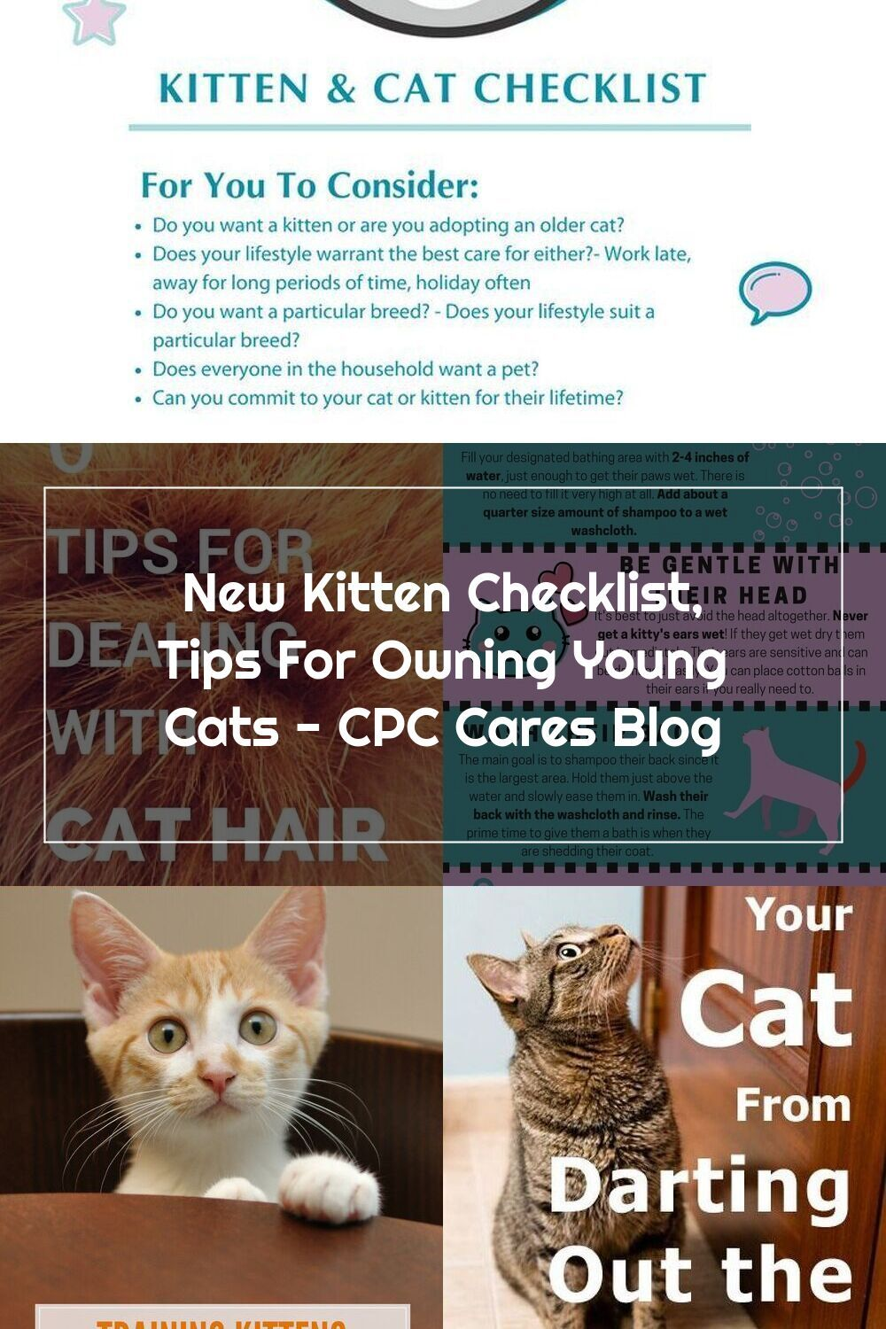 Kitten Cat Checklist Cpc Cares In 2020 Cat Checklist Cats And Kittens Cat Care