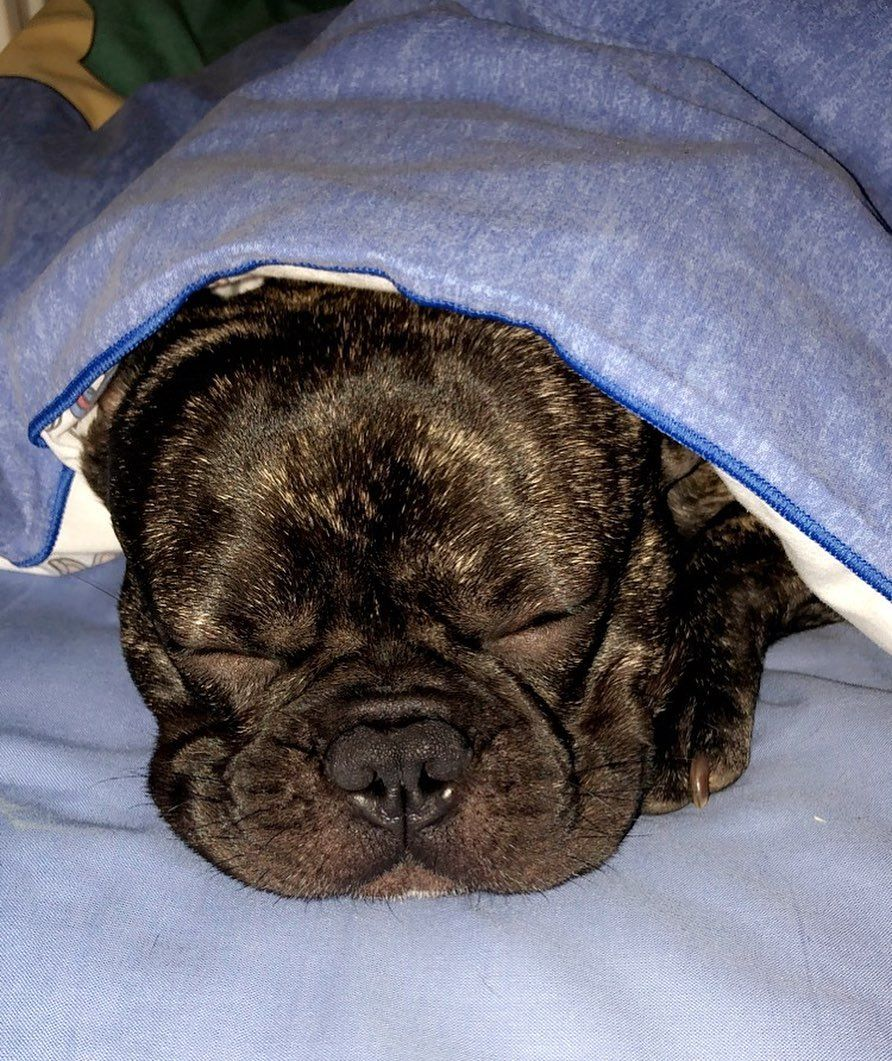 Free Pictures Of Dogs Sleeping
