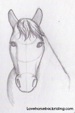 Draw A Horse Head Tutorial Easy And Cartoon Horse Drawing