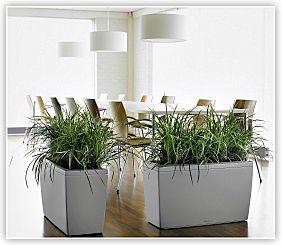 Plant Rentals | Plants For Rent | Interior Plant Service | TX Home Design Ideas
