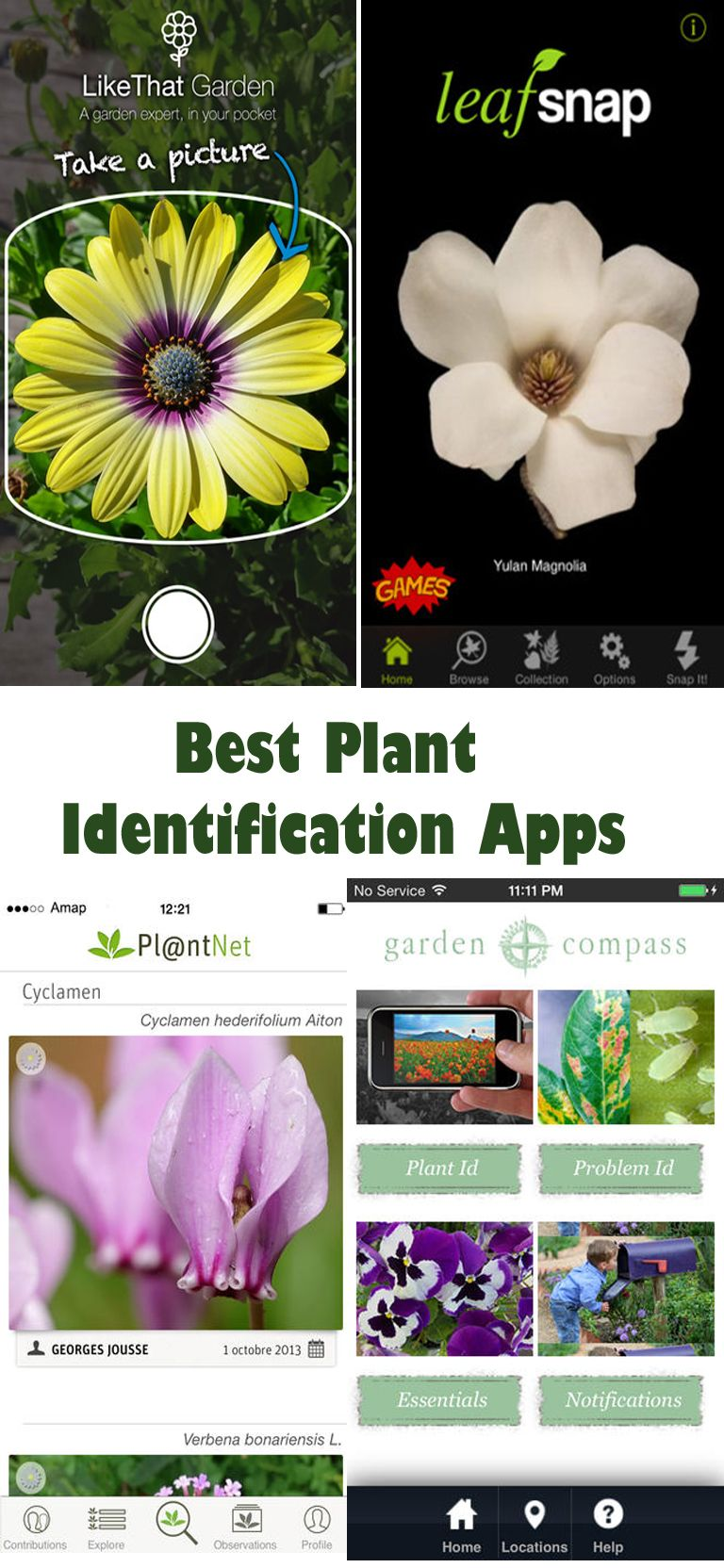 The Best Plant Identification Apps Plant identification