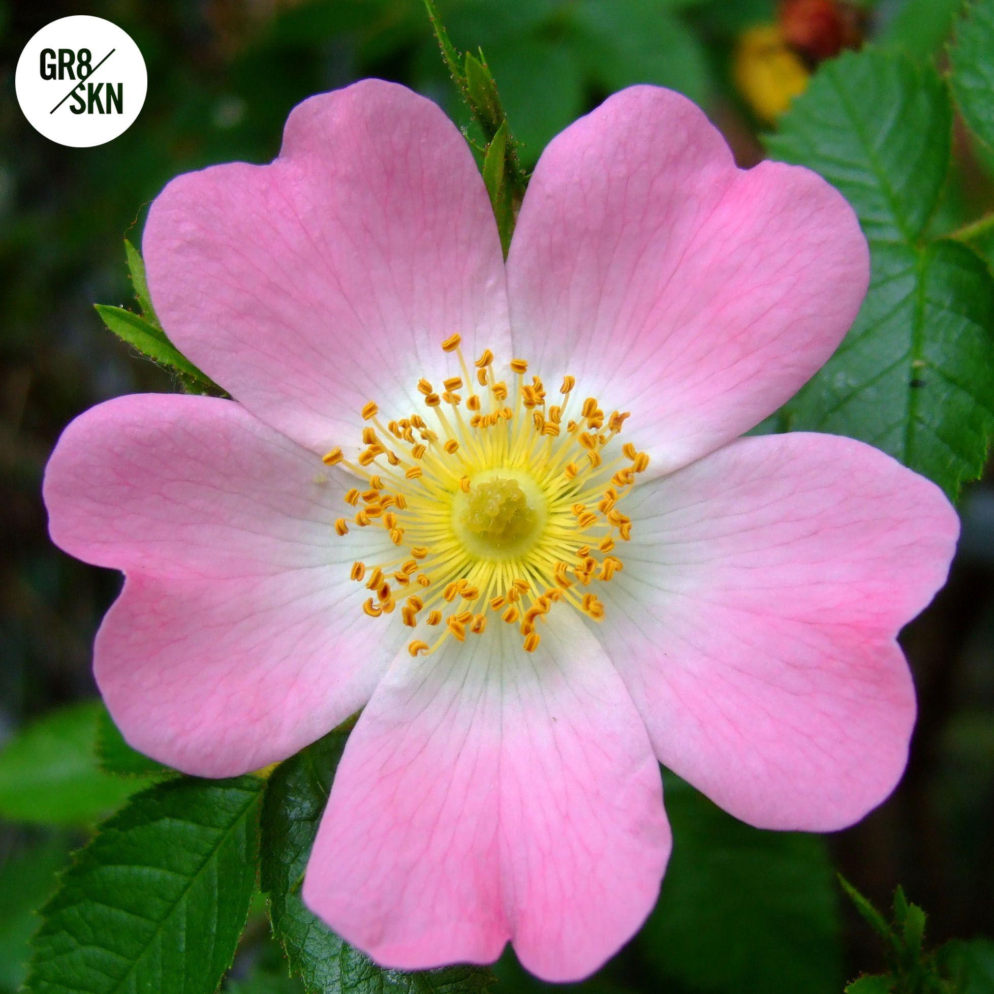 RESET Rebooting Night Serum British wild flowers