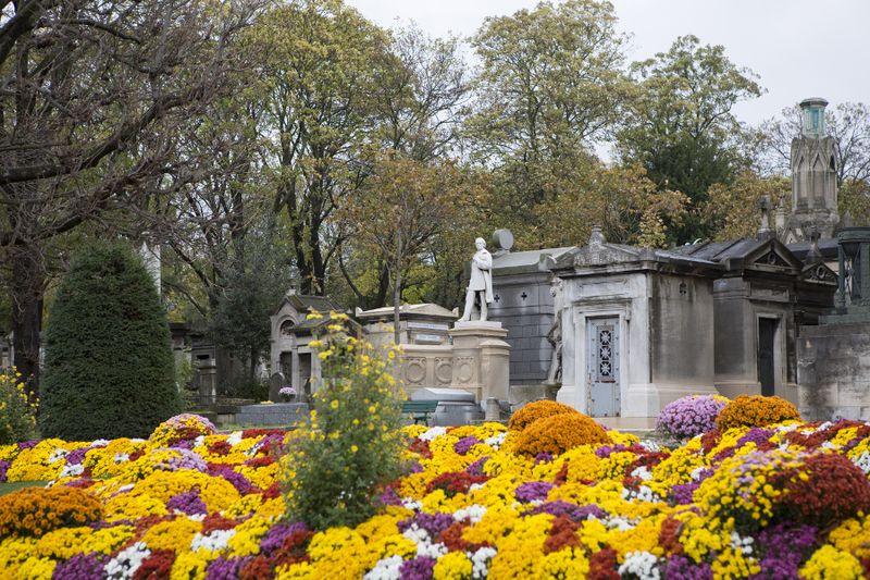 L'étrange histoire du chrysanthème, fleur d'or des cimetières   Étrange histoire, Chrysanthèmes ...