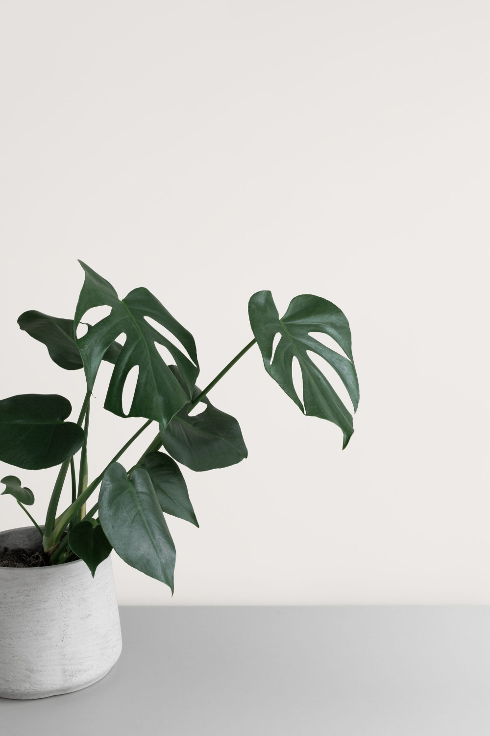 Aesthetic Minimalist Plant Wallpaper