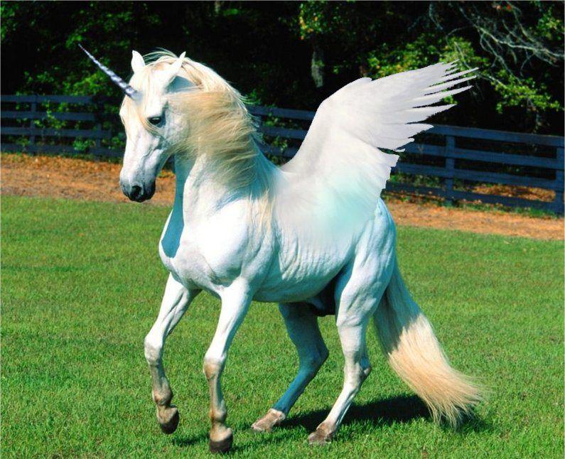 Unicorns History Magic Myth And Symbolism Unicorns Pinterest
