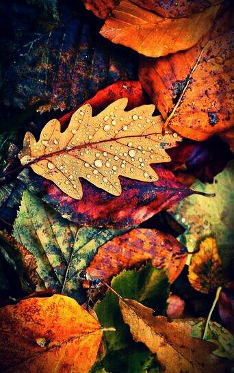Colori d'autunno discovered by Vero_nica on We Heart It