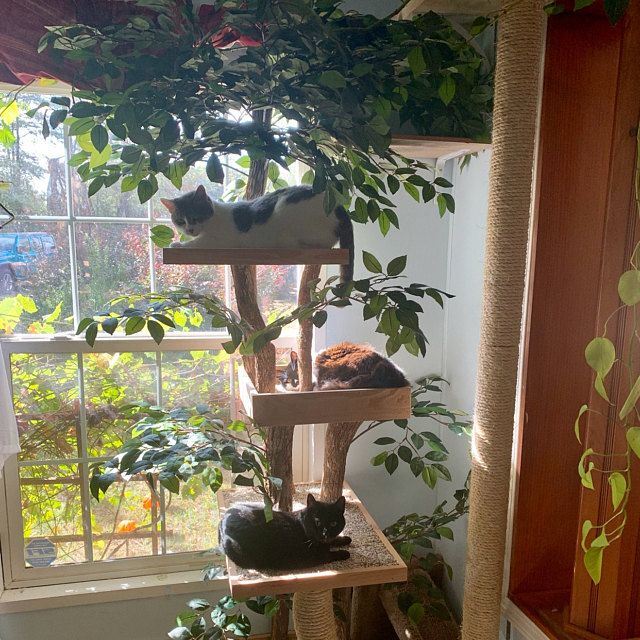Sycamore Cat Pet Tree House Etsy in 2020 Cat tree