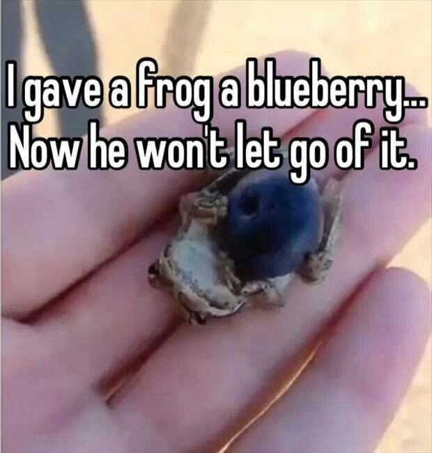 Le frog and le blueberry!! ;)