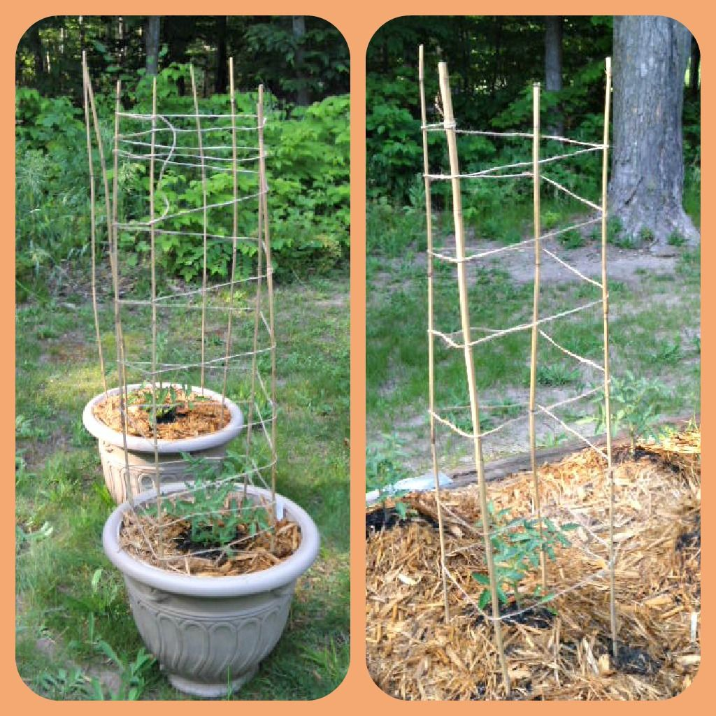 Bamboo Stakes And Twine Tomato Trellis Wrap The Twine Up 400 x 300