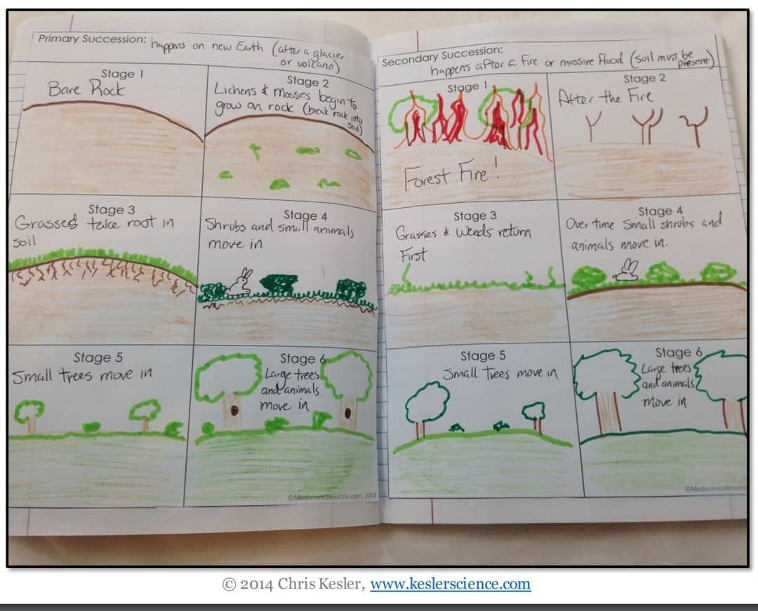 Succession Lesson Plan A Complete Science Lesson Using The 5e Method Of Instruction Kesler Science Science Lessons Ecological Succession Primary Succession