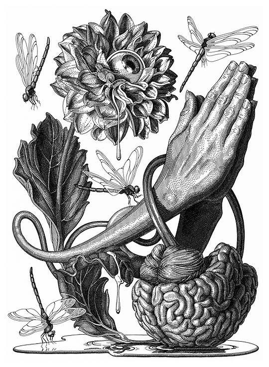 Dibujo tinta ilustracin y talento de OLIVIA KNAPP