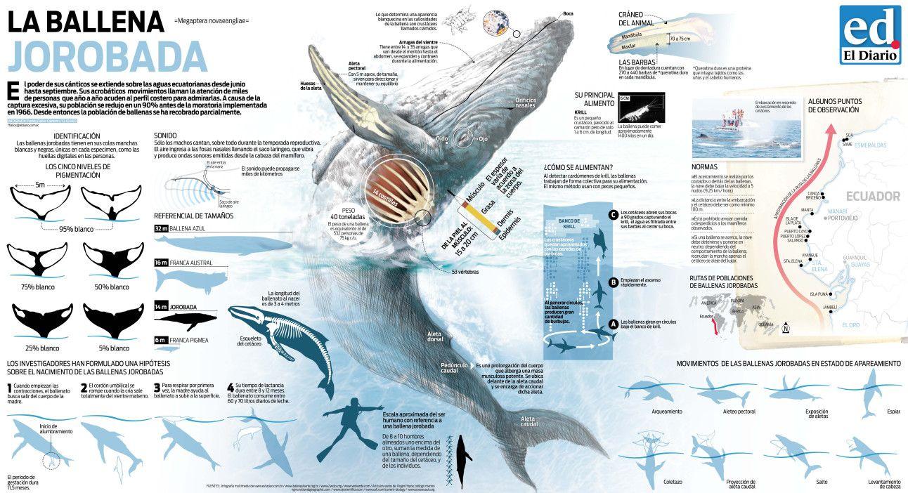 La ballena jorobada | Editorial | Pinterest | Ballena jorobada, La ...
