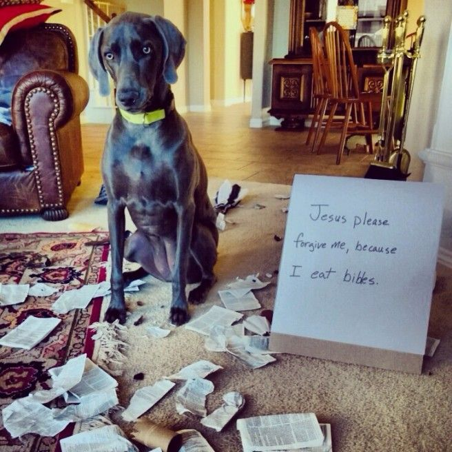 Dog Ate Bible Google Search Dogs Dog Eating Forgive Me