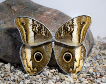 Real Butterfly encased in glass, and closed with solder: a wall hanging by CreoleJezebel