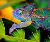 bem colorido