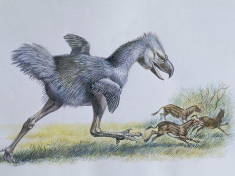 Phorusrhacos, aka Terror Bird