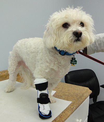 Pin By My Pet S Brace On Carpal Braces For Dogs Leg Braces Dog
