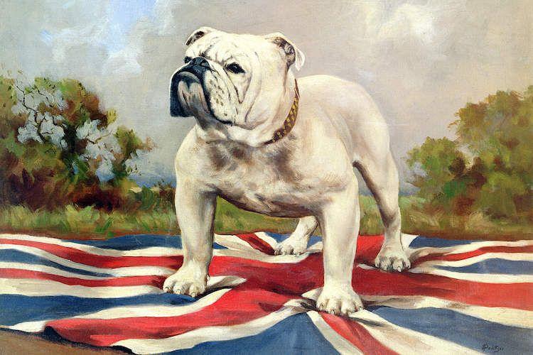British Bulldog Canvas Artwork By English School British Bulldog