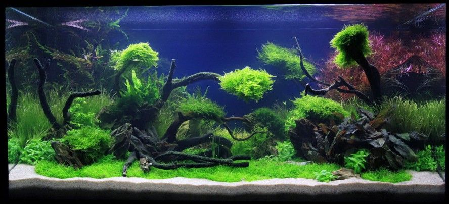 Great Aquascaping Design Idea for Your Aquarium Beautiful - deko fur aquarium selber machen