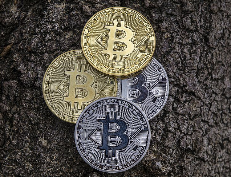 Bitcoin on a money tree, bark in background with 4 coins