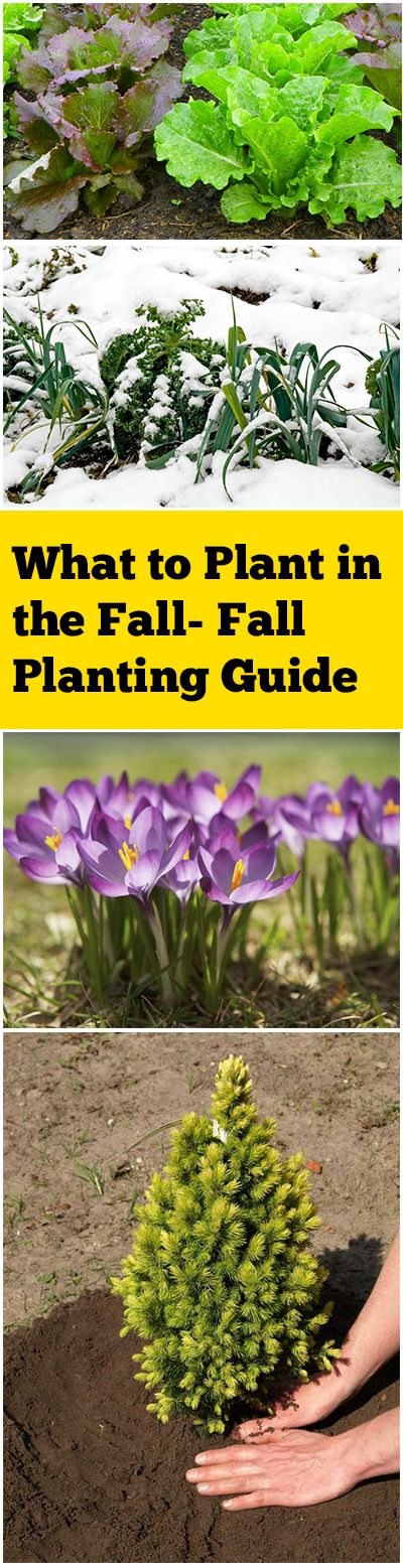 What to Plant in the Fall Fall Planting Guide Football season