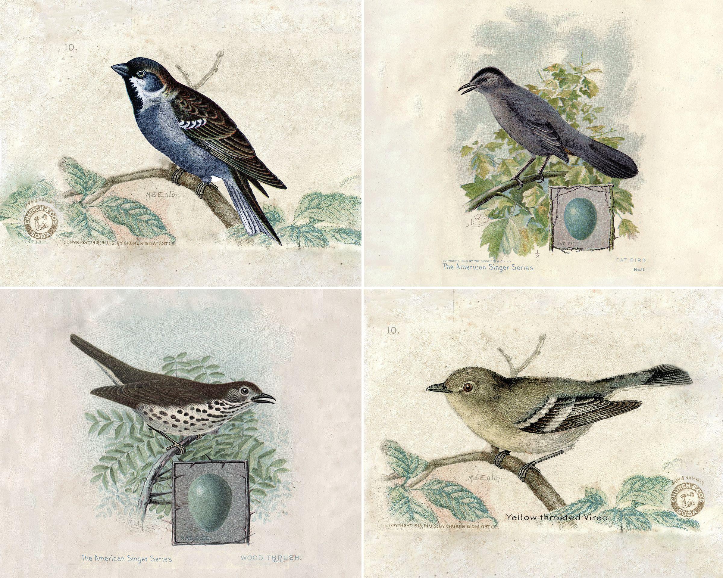 Vintage Bird Prints Vintage Birds Bird Prints Free Art Prints