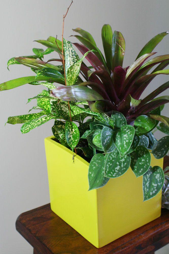 Cubicle Buddy Indoor Plant Container Arrangement