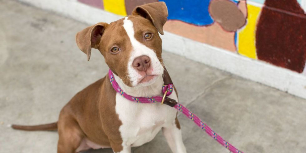 This U S City Just Made It Illegal For Pet Stores To Sell Breeder Dogs With Images Bully Breeds Dogs Baby Dogs