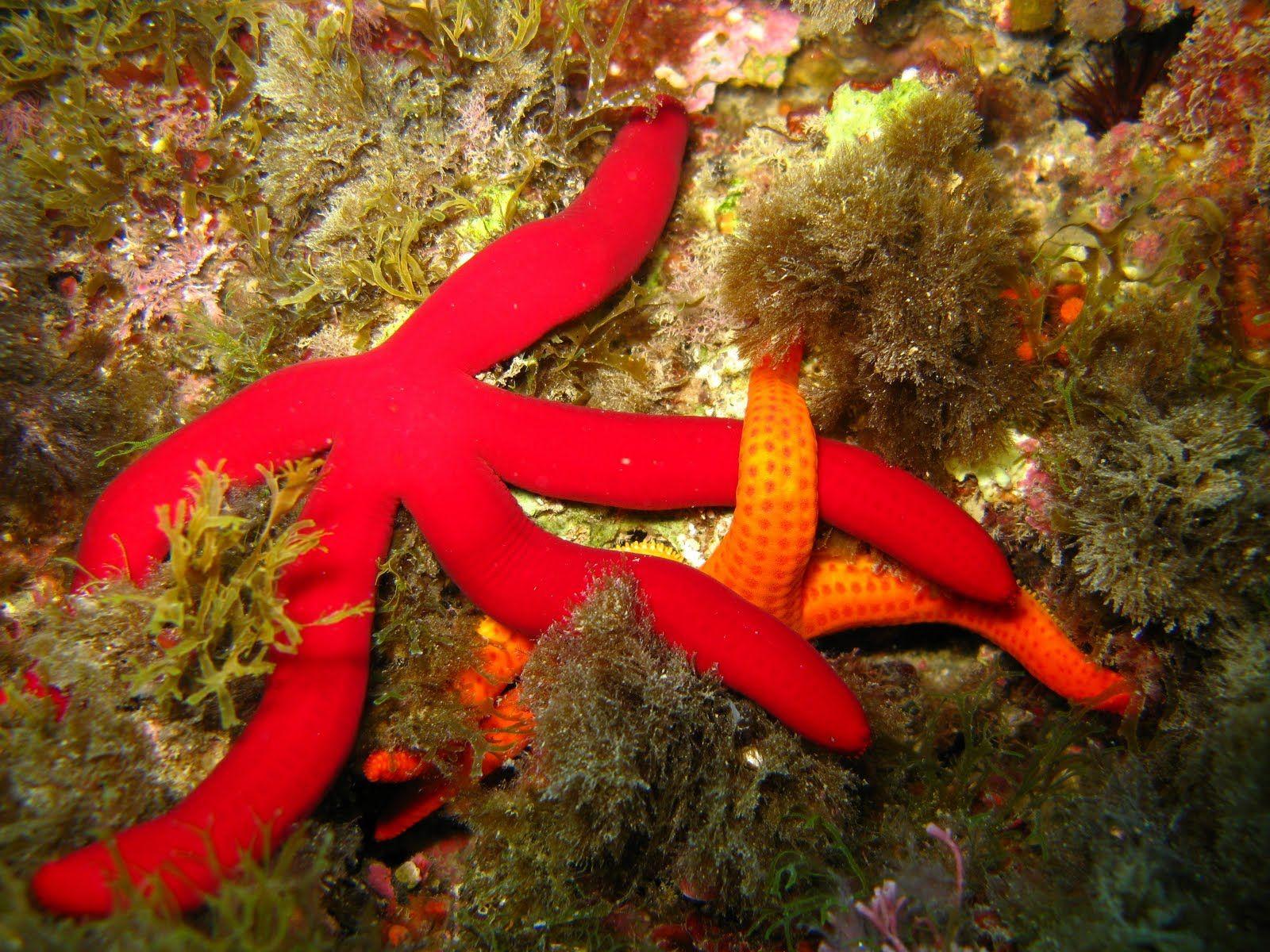 Starfish Anatomy Worksheet   Mister Click   Astérie   Pinterest ...