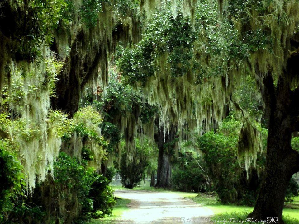 My path is endless, wisdom! My arts, Plants, Garden
