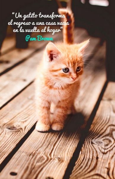 Citas sobre Gatos - Página 5 - Mi Perro Es Único