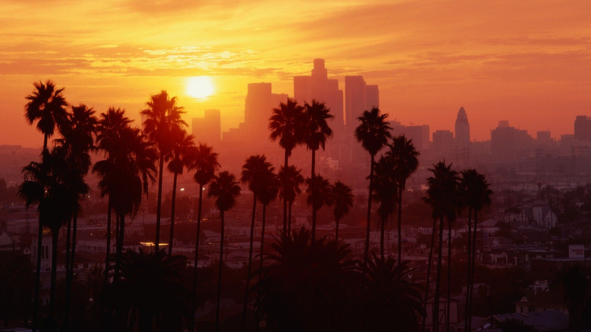 Download Hd Wallpapers Of 142660 Los Angeles Sunset Palm Trees Free Download High Quality And Los Angeles Palm Trees Tree Hd Wallpaper Palm Trees Wallpaper