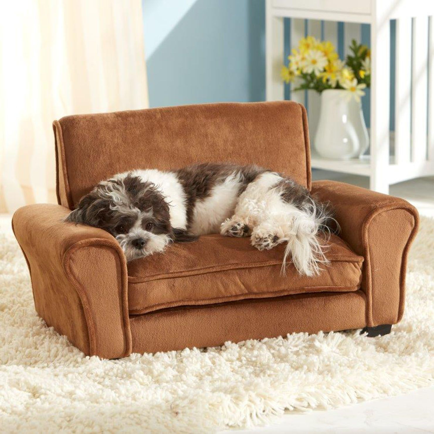 Keep your own sofa clean, give the dog his very own! Dog