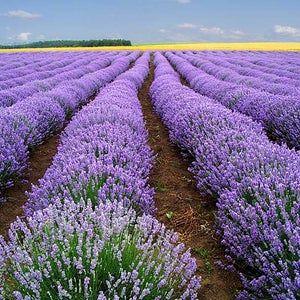 نبات بحرف ض مجموعة متنوعة ما بين النباتات العطرية والصحراوية بالصور إيمدج عرب In 2020 Vegetables Cabbage Food