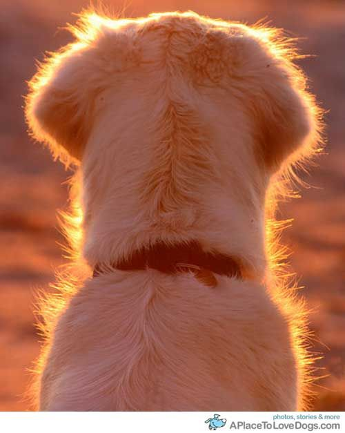 golden facing the subset. A very cool angle for a photo.
