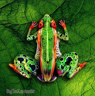 Body art Frog Frogs Pinterest Frogs, Body art and Bodies - frog body