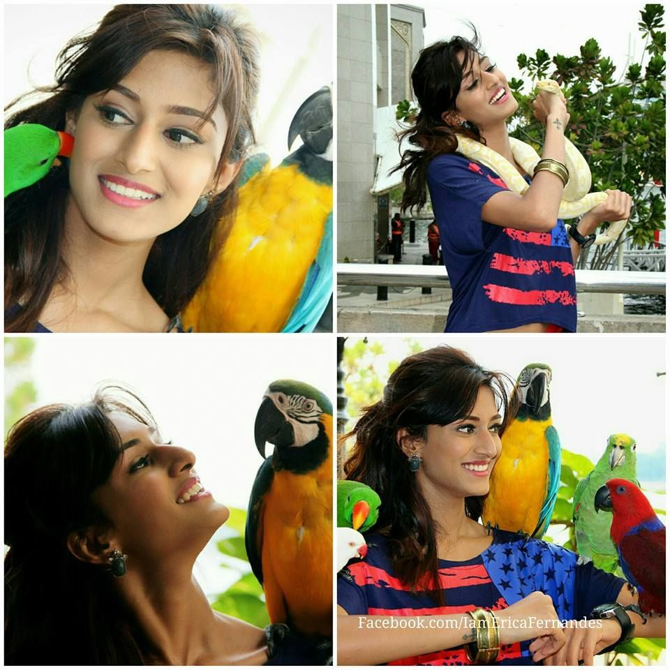 Different Shades Erica Fernandes