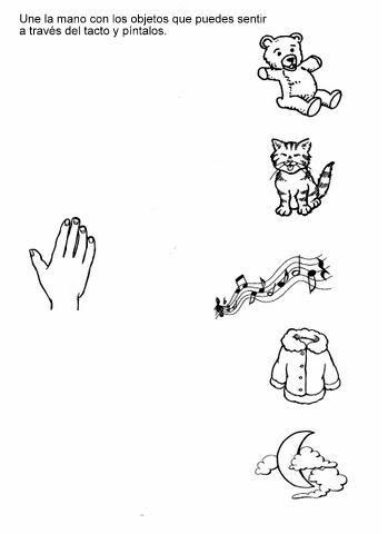 Los 5 sentidos | Escuela | Pinterest | Preescolar, Ciencia y Cuerpo